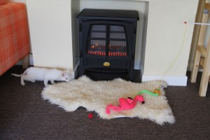 Cat In The Lounge at catsonly, bray - cat animal hospital for just cats