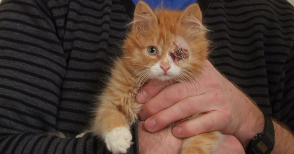 Edward the kitten had his eyeball removed