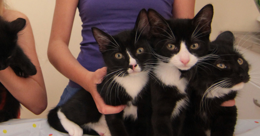 A semi wild cat had five kittens in the family home