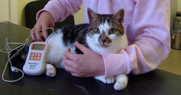 Sophie the cat suffered a broken pelvis