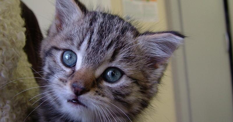 Kitty a 6 week old stray kitten