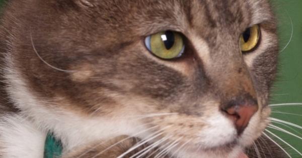 Pasha the cat had dental disease