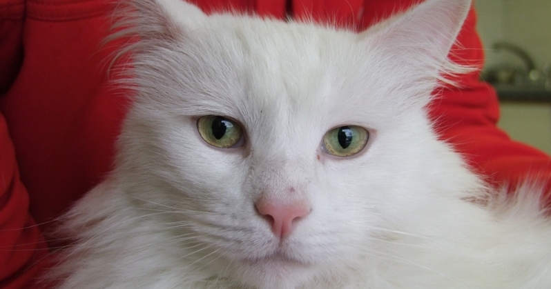 Snowy  the cat suffered serious injuries