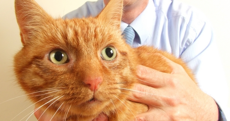 Ginger the cat had toothache
