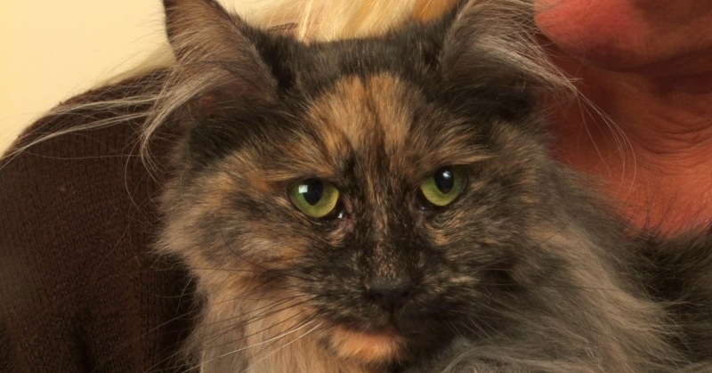 A Cat Who Had Renal Failure