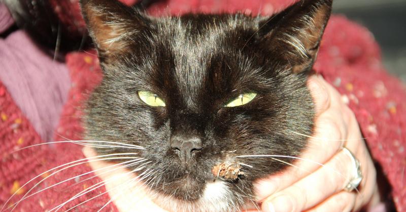 Max the cat was shot by an air gun