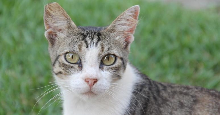Taqui is a beautiful feral cat