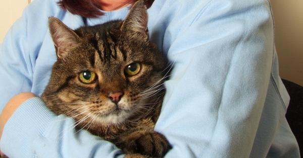 Jake is an older cat with kidney disease