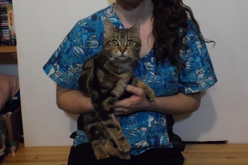 Sassy the three month old kitten
