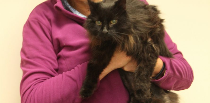 Persia is a 14 year old with a new lease for life